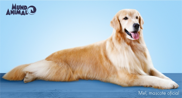 The pets coat must also be hydrated! - Pet Tips | Mundo Animal